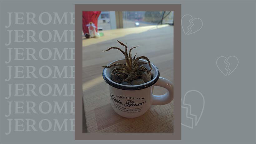 jerome the dead succulent :(